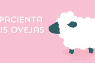 apacientas mis ovejas - conexionsud-01